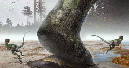 Dinosaur tracks: Why would a four-footed dino leave two-footed prints?