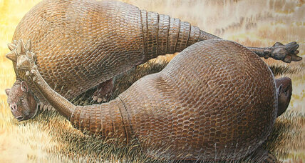What is that huge-armadillo-looking thing? A huge armadillo, say scientists.