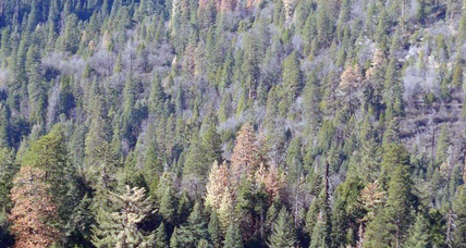 Not just a western problem, drought threatens forests across US