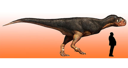Dusty dinosaur bone sheds new light on perplexing giant predators