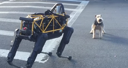 Will robots become pets? Maybe, but your dog won't like it. (+video)