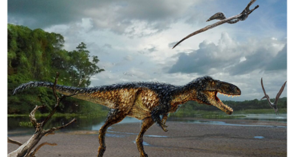 How did T. rex get such keen, predatory senses? New tyrannosaur offers hints.