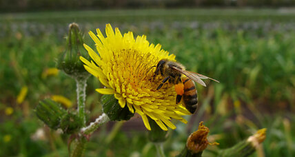Are pesticides changing how bees forage?