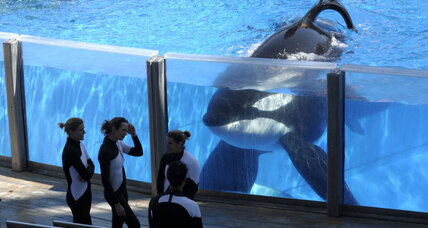 In double win for activists, SeaWorld ends orca breeding, boosts animal rescues