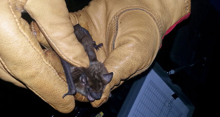 Can bats be protected from wind turbines?