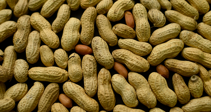 Scientists use peanut ancestors to sequence the legume's genome