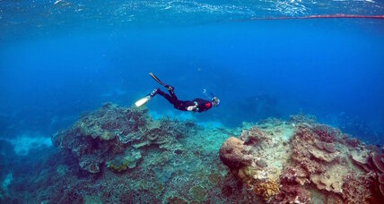 Scientific study shows resilience among fragile coral reefs