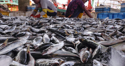 Scientists highlight path to restoring world's fisheries