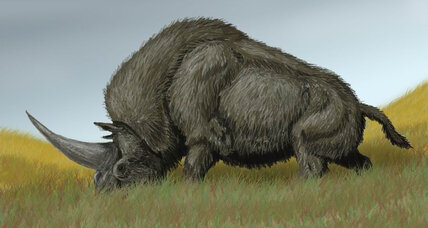 Siberian 'unicorn' lived for much longer than we thought