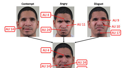 What is the 'not face'? Everyone has one, say scientists.