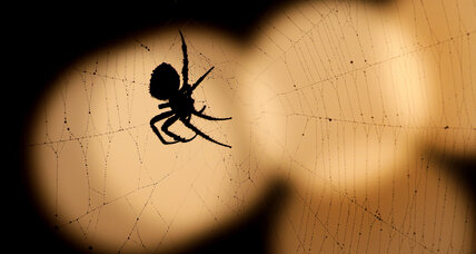 Where do spiders come from? A tiny, prehistoric 'almost spider' offers clues.
