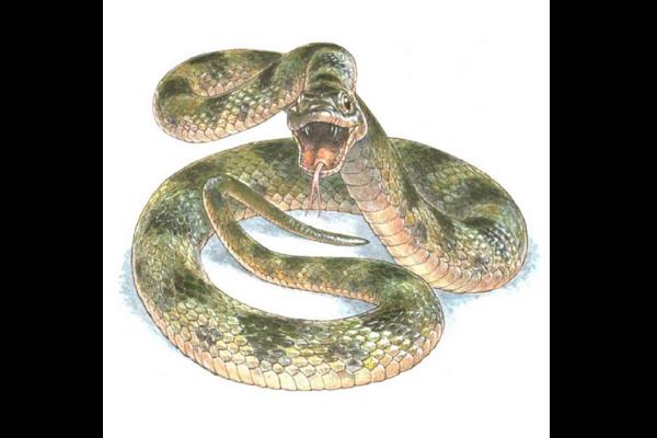 973584_1_0331-snake-color_standard.png?alias=standard_600x400
