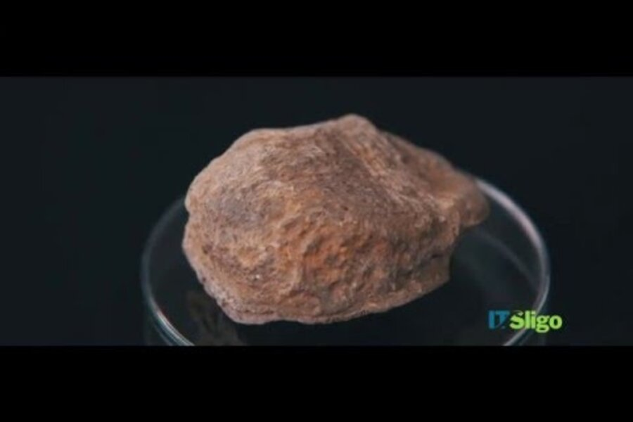 When did humans arrive in Ireland? Fossilized bear knee resets the clock.
