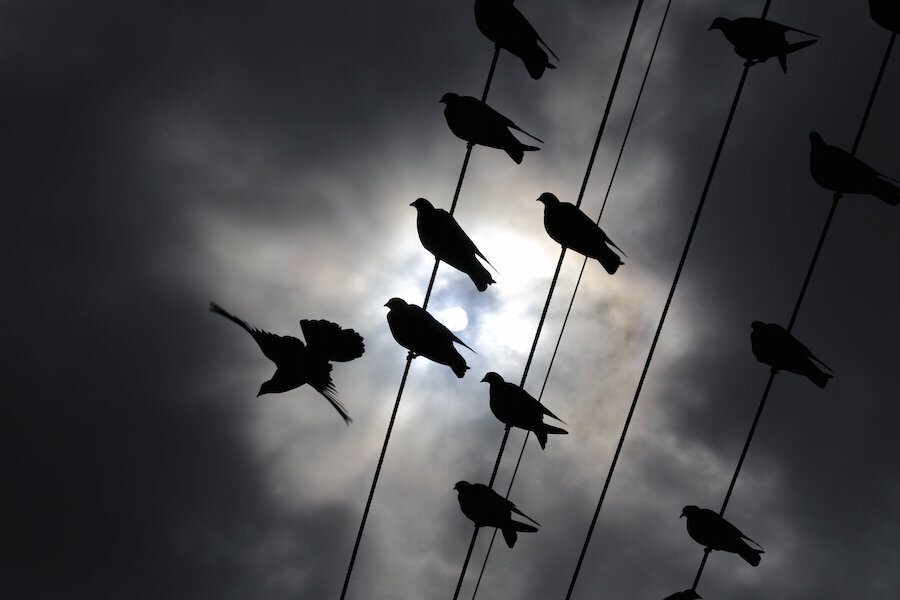 Climate change is for, and against, the birds, say scientists