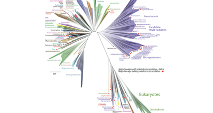 Newly discovered microbes expand tree of life, say scientists