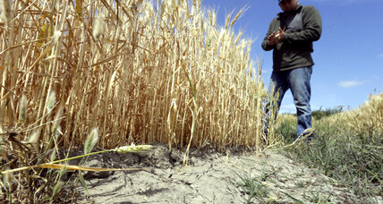 Why rising carbon dioxide may actually help some crops