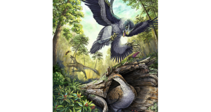 Did seeds help birds become the only living dinosaurs?