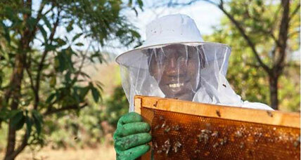 Modern beekeeping offers Ethiopian youths a sweeter future