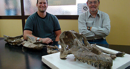 'Once in a lifetime' dino find yields new titanosaur species