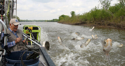 Goldfish or Asian carp? Why it matters in the Great Lakes.