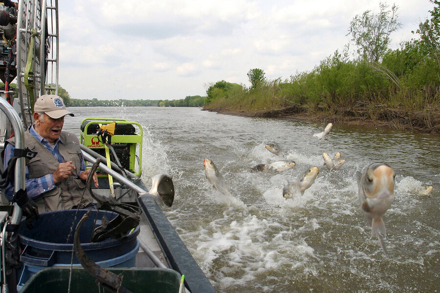 Goldfish Or Asian Carp Why It Matters In The Great Lakes - Asian carp map 2016 non us