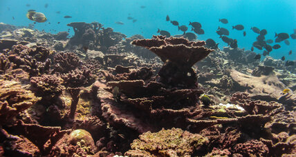 Coral reefs are dying – just when we need them most