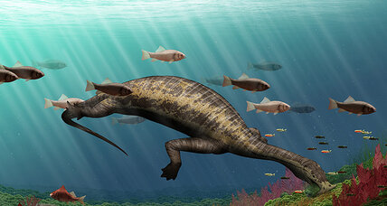 Was this hammerhead herbivore the ocean's first vegetarian reptile?