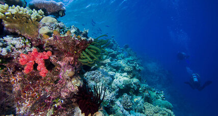 Why does coral reef diversity cluster in southeast Asia?
