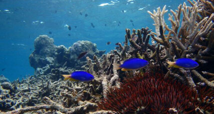 Damsels in distress: Coral reef decline denudes damselfish of defenses
