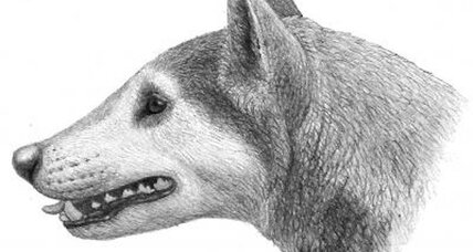 12-million-year-old fossil points to 'bone-crushing' North America dog