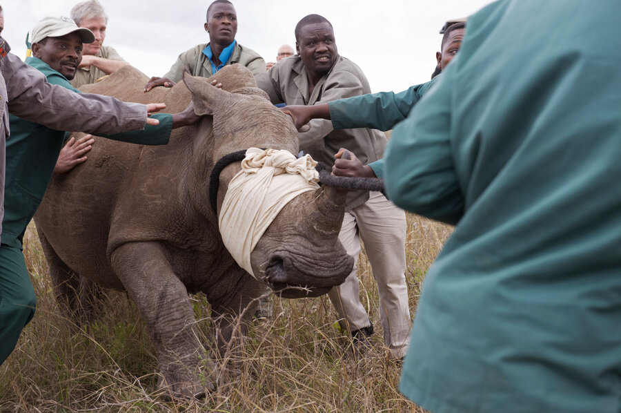 South Africa legalizes sales of rhino
