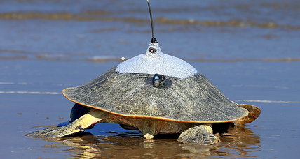 On World Turtle Day, how are the reptiles faring?