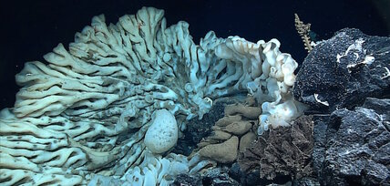 Is that a minivan or a sea sponge? Scientists find possible oldest animal.