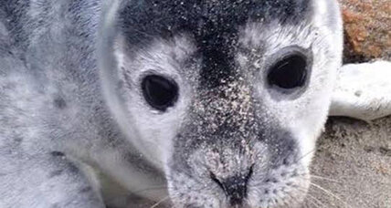 Please skip the seal selfies, for pups' sake, asks NOAA