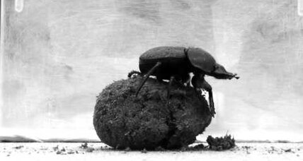 Celestial navigation: Dung beetles navigate by 'snapshot' of the stars