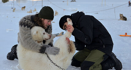 Arctic endeavors and canine friends