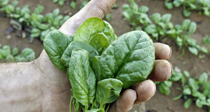 Is it possible to grow spinach locally and year-round?