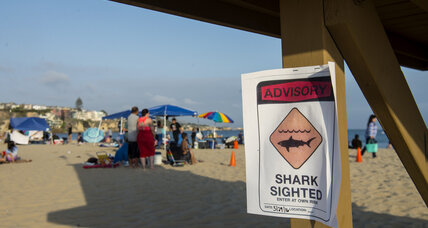 California beach closed: Are humans more dangerous than sharks?