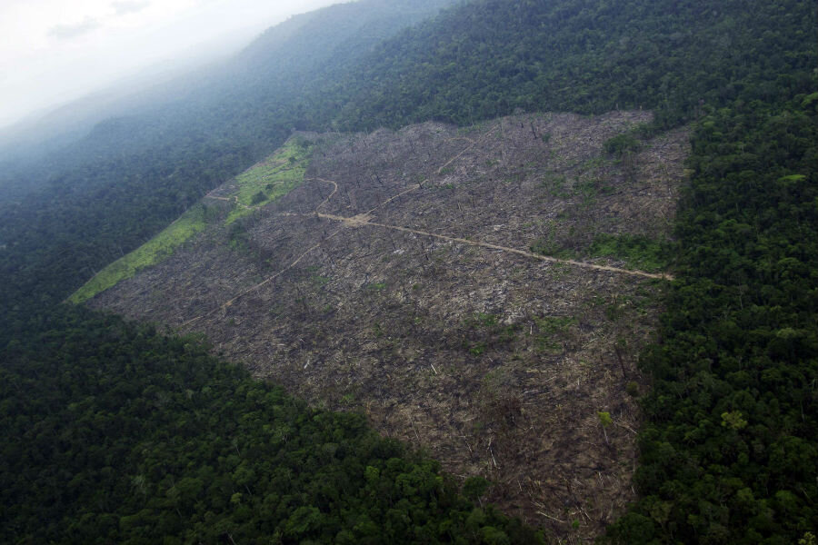 Norway adopts world's first zero deforestation policy: What does that mean?