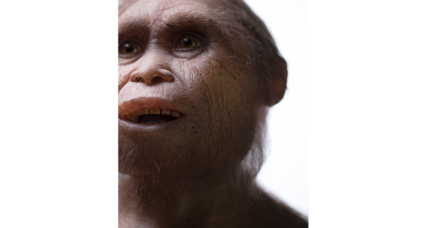 Who were the real-life 'hobbits'? 700,000-year-old fossils hold clues (+video)