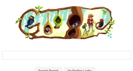 Google honors Phoebe Snetsinger, who risked her life to see over 8,000 birds