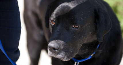 How some police departments are trying to prevent 'puppycide'