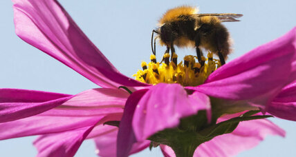 How bees are getting a boost around the world