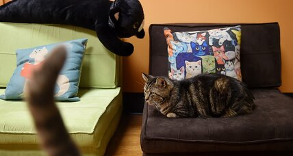 Cat café study shows what cats and physicists have in common