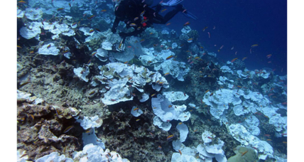 Even as bleaching continues, hope remains for coral reefs