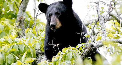 Florida calls off 2016 bear hunts, saying use critter-proof trash cans instead (+video)