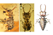 Amber fossils trapped ancient insects wearing camo