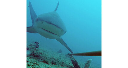 Global underwater camera survey reveals where sharks like to hang out