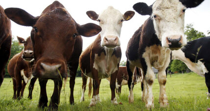 Why we should protect disappearing livestock breeds