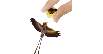 What can amber-encased baby bird wings say about prehistoric flight?